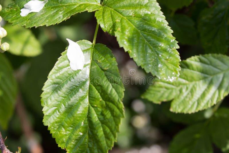 White petal on green leaf. royalty free stock photos