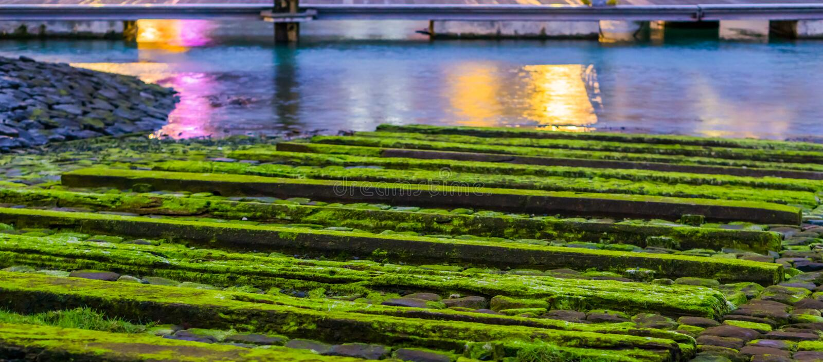 Wooden planks covered in moss, water landscape scenery, tranquil nature background royalty free stock image