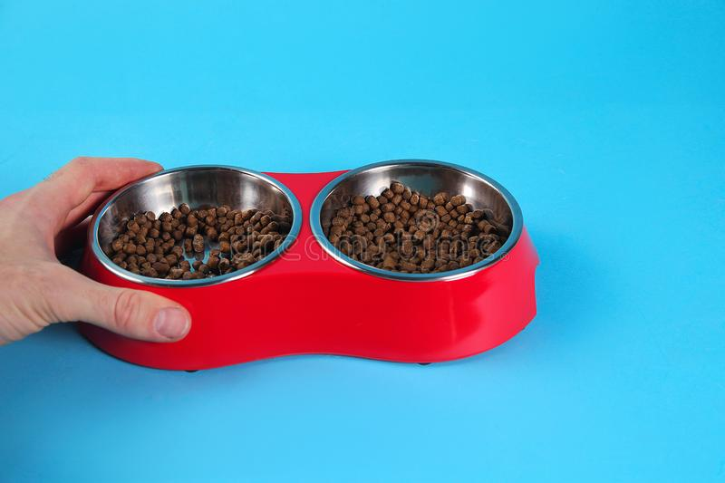 Somebody`s hand holding Dry cat food in bowls isolated on blue stock image