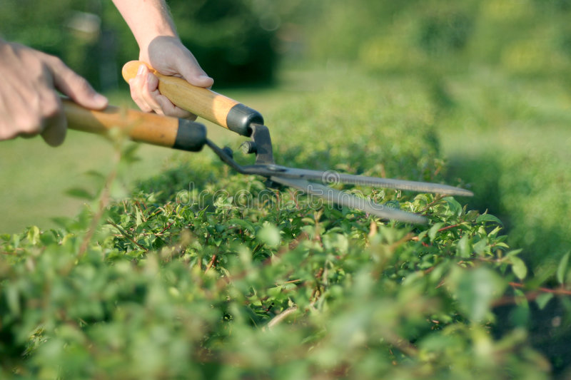 Download Someone trimming bushes stock image. Image of branch, garden - 5180367