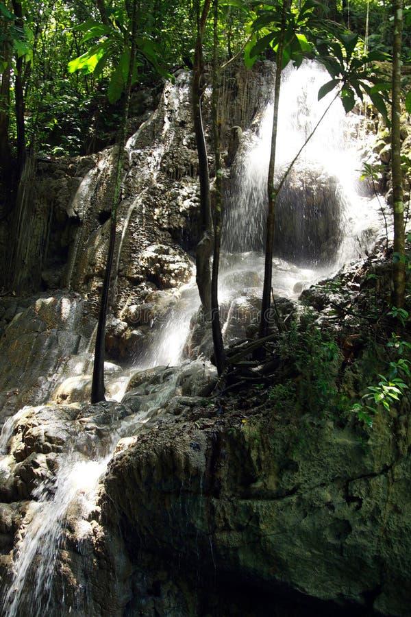 Somerset siklawy w dżungli i jamie blisko Portland, Jamajka obraz stock