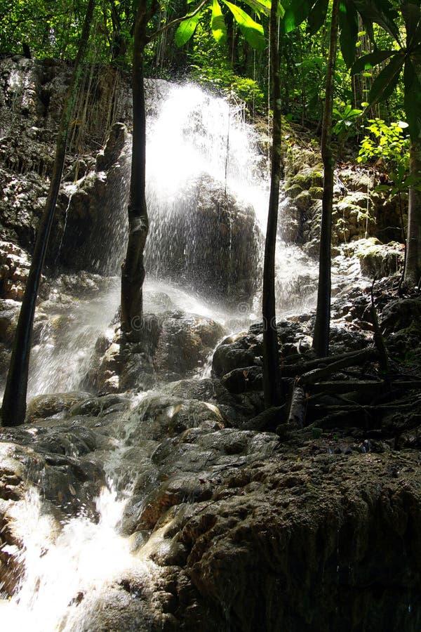 Somerset siklawy w dżungli i jamie blisko Portland, Jamajka zdjęcie royalty free