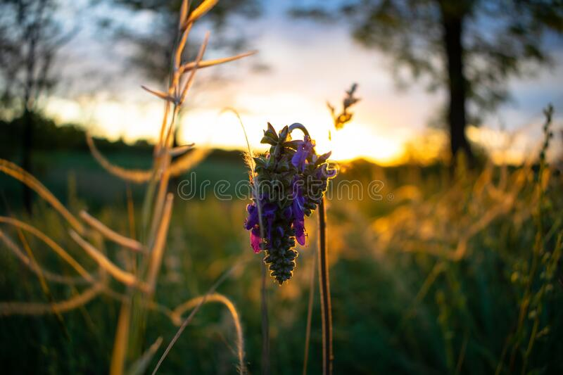 Close-up on sunset stock photography