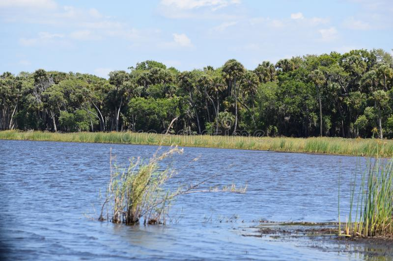 Somewhere in the Everglades of southern Florida a gator waits. Aligator, wet, lands, crocodile, snakes, sawgrass, seminole, cypress royalty free stock images