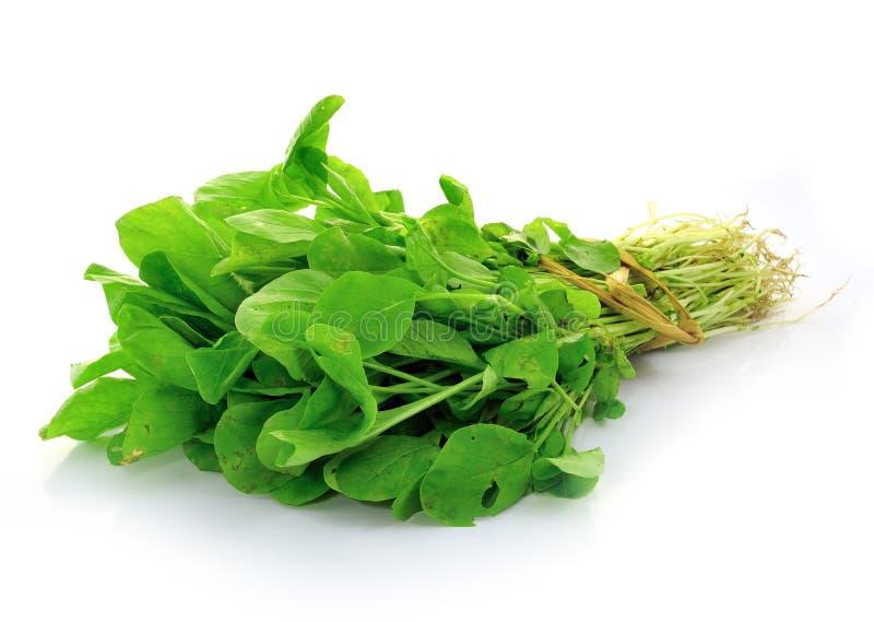 Somma di Choy, un genere di verdura cinese immagini stock