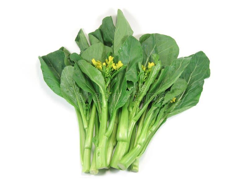 Somma di Choy, un genere di verdura cinese fotografia stock