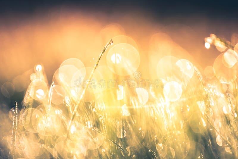 Sommaräng, fält för grönt gräs i varmt solljus, naturbakgrundsbegrepp arkivfoto