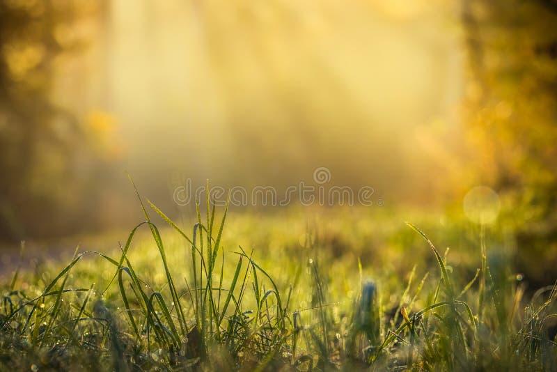 Sommaräng, fält för grönt gräs med strålar av varmt solljus, naturbakgrundsbegrepp fotografering för bildbyråer