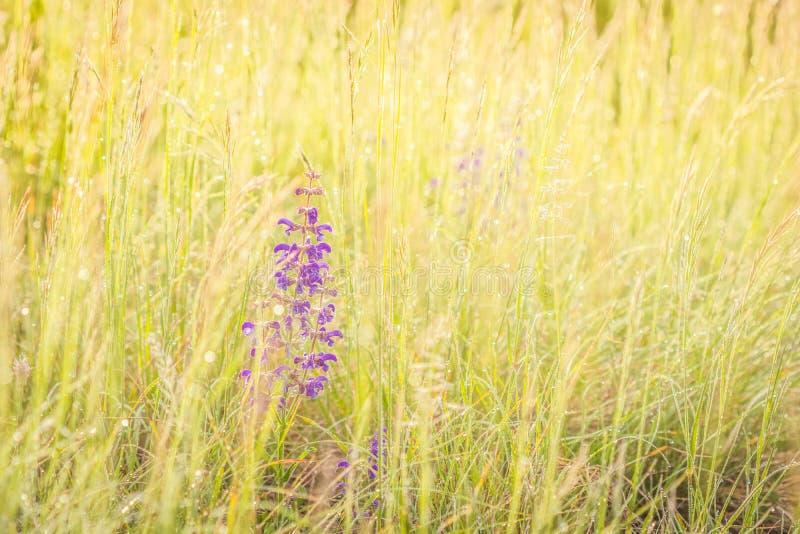 Sommaräng, fält för grönt gräs och vildblommor i varmt solljus, naturbakgrundsbegrepp, mjuk fokus, varma pastellfärgade signaler arkivbild