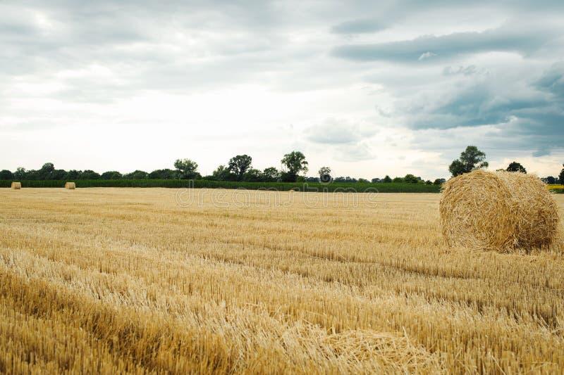 Sommaräng med gula guld- baler av höbalen i stubbåkern Jordbruks- fält och en blå himmel med moln arkivbilder