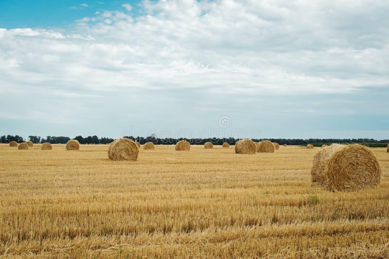 Sommaräng med gula guld- baler av höbalen i stubbåkern Jordbruks- fält och en blå himmel med moln royaltyfri fotografi