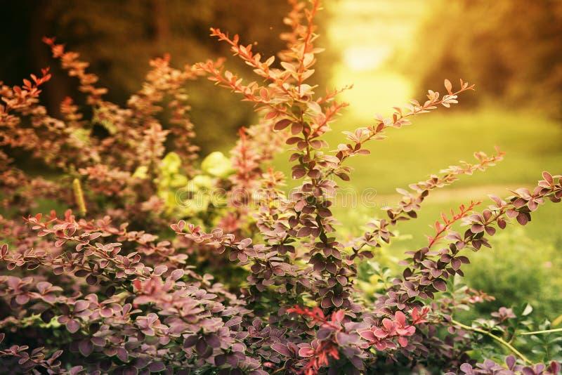 Sommaräng på solnedgången arkivbilder
