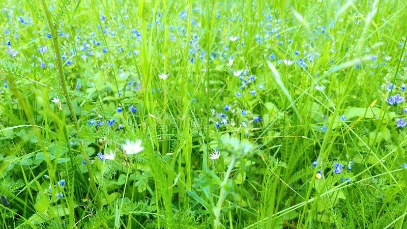 Sommar blommar p? ?ngen royaltyfri foto