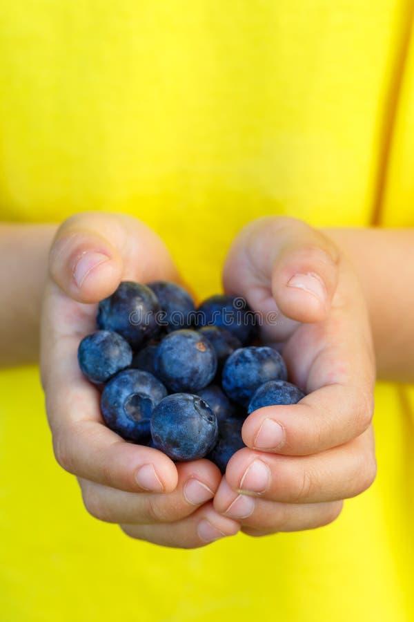 Sommar för frukt för bär för blåbäret för blåbärbärfrukter räcker ho royaltyfri bild