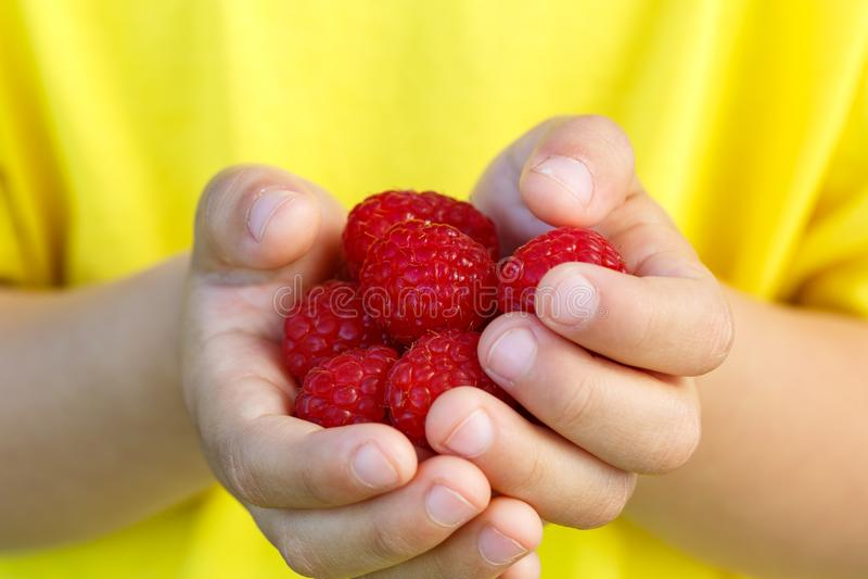 Sommar för frukt för bär för hallonet för hallonbärfrukter räcker ho arkivfoto