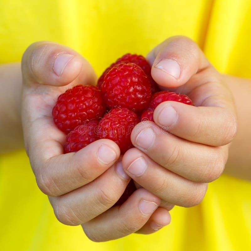 Sommar för frukt för bär för hallonet för hallonbärfrukter räcker ho arkivfoton