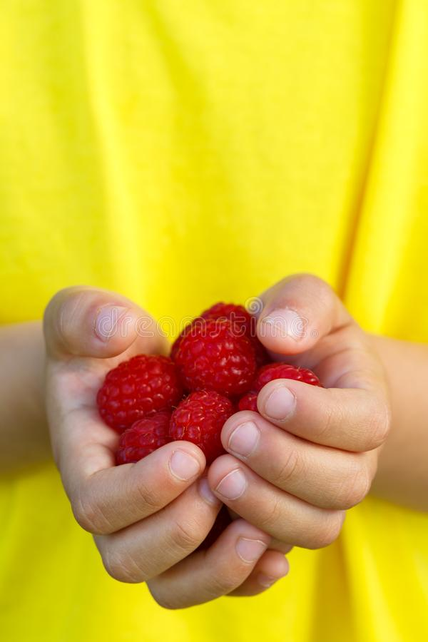 Sommar för frukt för bär för hallonet för hallonbärfrukter räcker ho royaltyfri foto