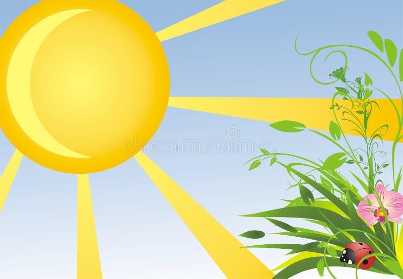 sommar för orchid för bakgrundsgräsnyckelpiga royaltyfri illustrationer