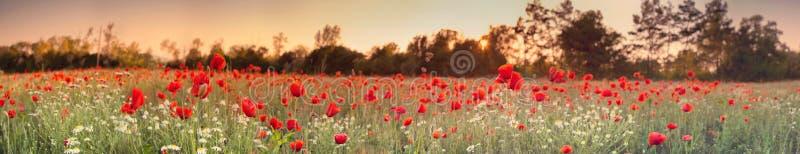 sommar för red för vallmo för färgfält indisk arkivfoto