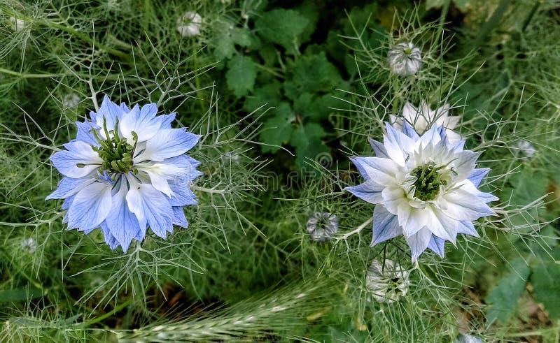 sommar för sally för blomma blomma för dagfältfireweed lantlig arkivfoto