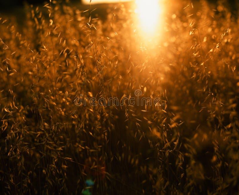 sommar för växt för bakgrundsblurgräs ett royaltyfri fotografi