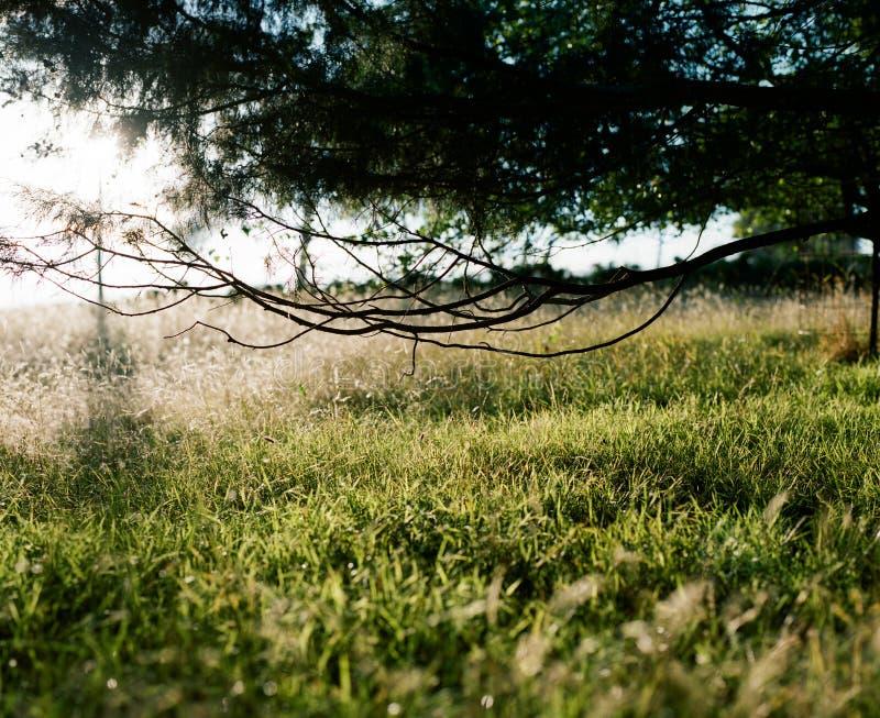 sommar för växt för bakgrundsblurgräs ett arkivbild