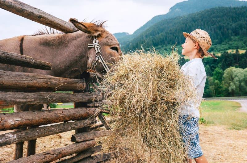 Sommar i bygd: pyshjälp på lantgård med djuret royaltyfria foton