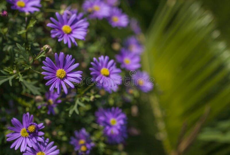 Sommar i London, England, UK - violetta blommor arkivfoto