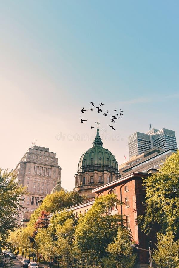 Sommar i Montreal - kyrka royaltyfri fotografi