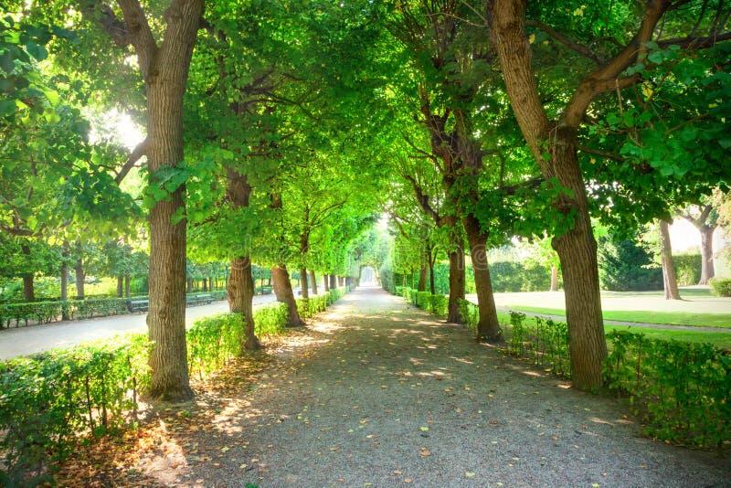 Sommar i parkera royaltyfri fotografi