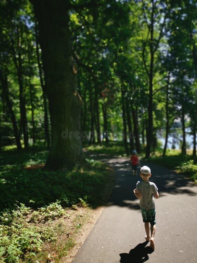 Sommar i skog royaltyfri foto