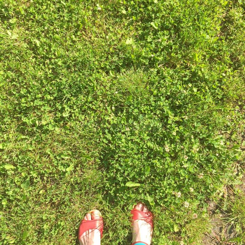 Sommar kopplar av på det nya gräset arkivbilder