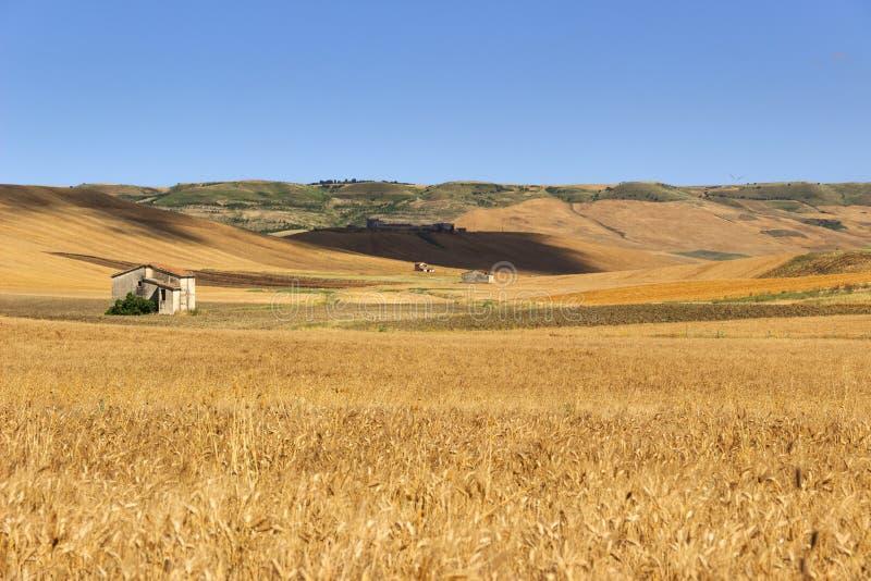 Sommar: lantligt landskap Mellan Puglia och Basilicata: kullar med cornfields och lantbrukarhem italy royaltyfri foto