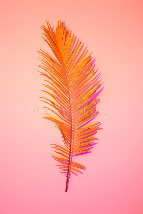 Sommar - orange exotiskt blad på rosa färger, affischorientering royaltyfri foto