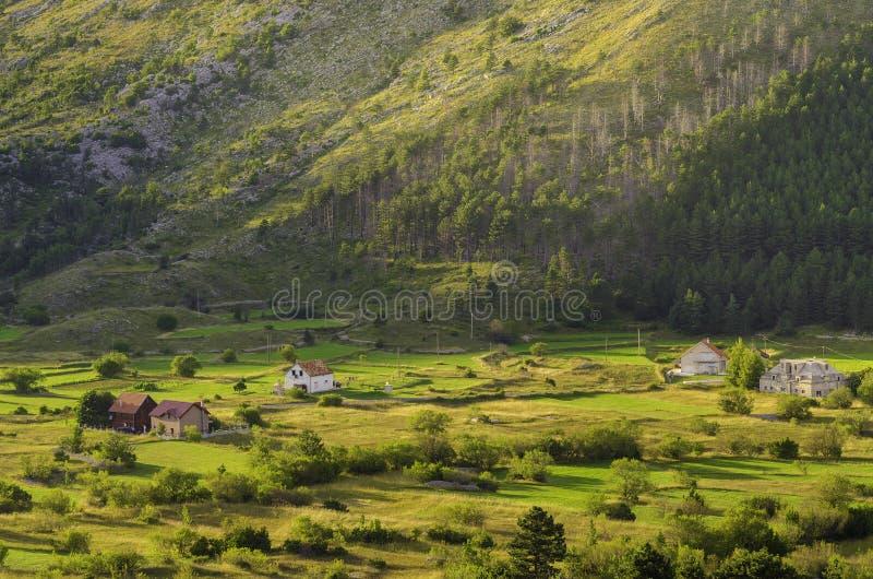 Sommar på en solig dag, berg, gröna fält och ängar Bergby Montenegro fotografering för bildbyråer