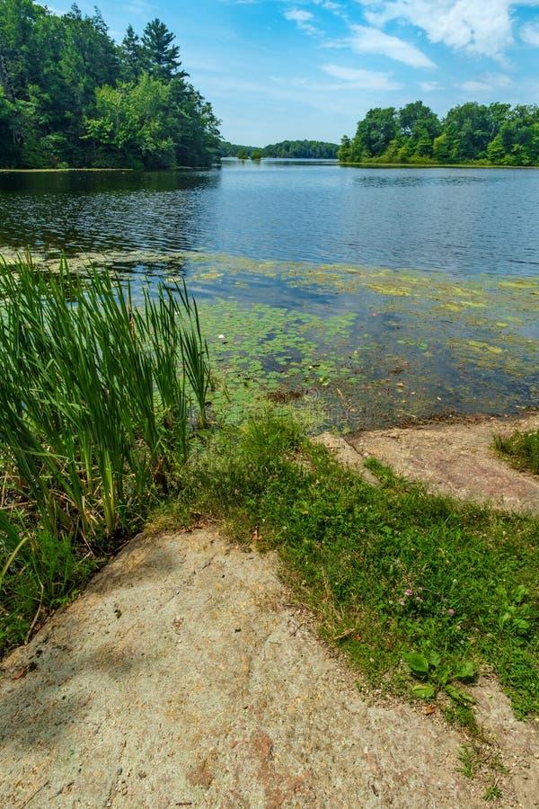 Sommar sjö Lily Pads arkivfoto