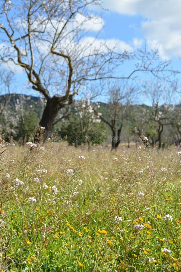 Sommar som sparas av blommor arkivfoton