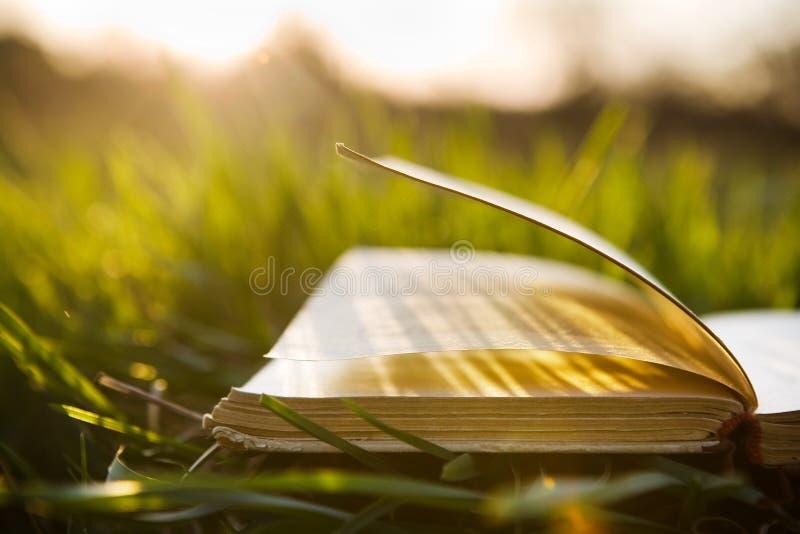 Sommarbackgound med den öppna boken arkivfoton