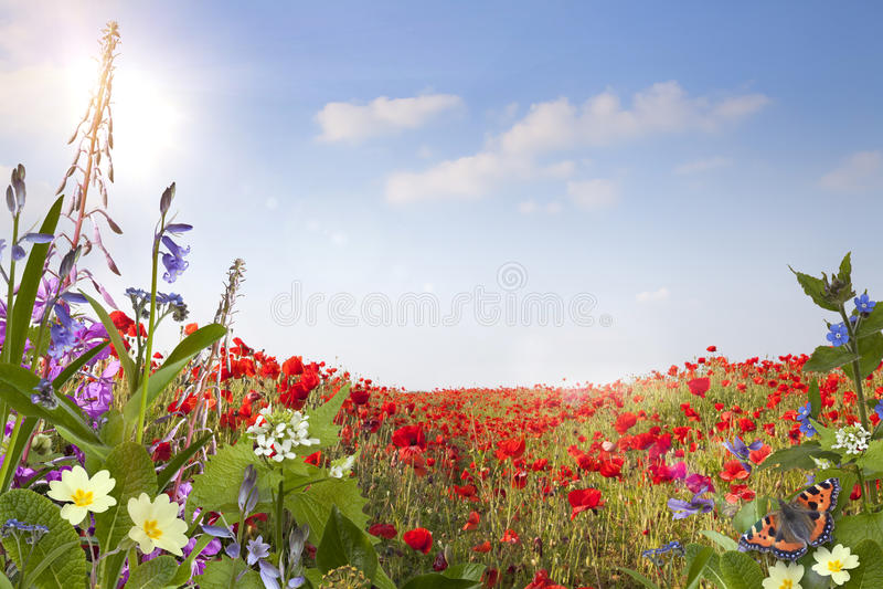 Sommarbakgrund arkivbild