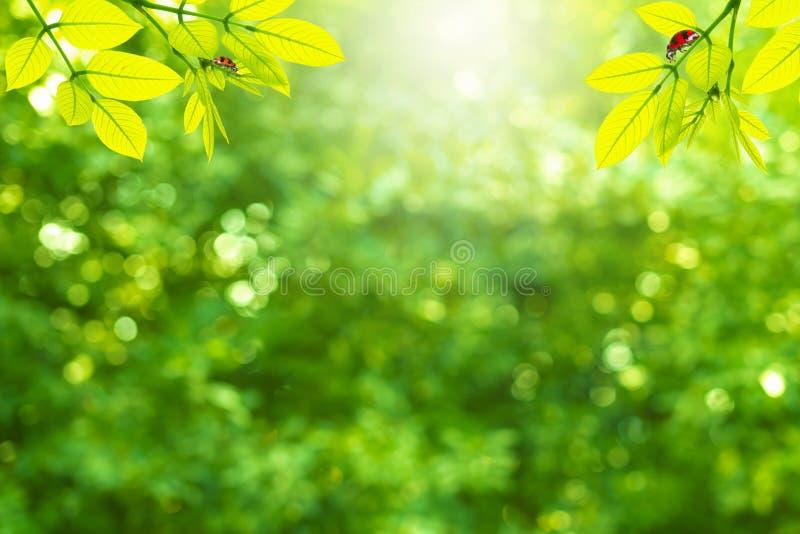 Sommarbakgrund med grön färg royaltyfria foton