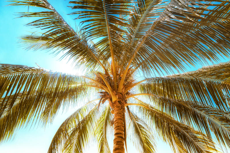 Sommarbakgrund med tropiska palmträdsidor på den soliga dagen royaltyfri bild