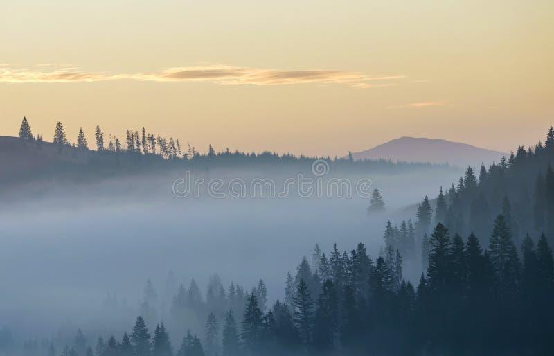 Sommarberg landskap Morgondimma över blåa bergkullar som täckas med den täta dimmiga prydliga skogen på ljus rosa himmel på royaltyfria foton