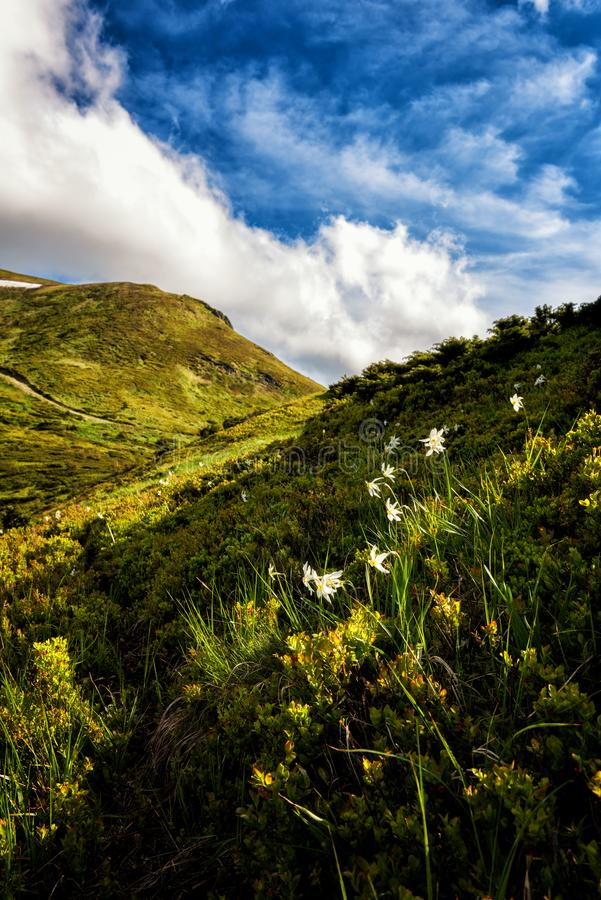 Sommarberglandskap med att blomstra lösa vita pingstliljablommor och blå molnig himmel, vertikal loppbakgrund royaltyfria foton