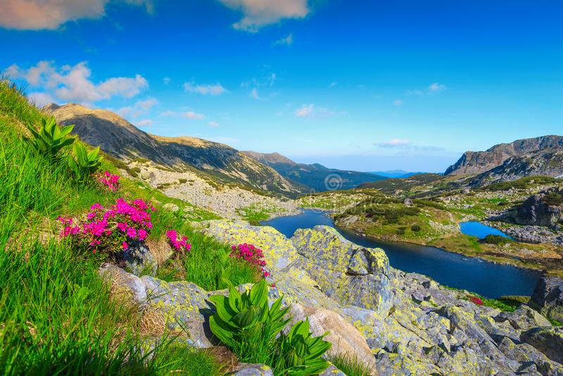 Sommarberglandskap med blommor och alpina sjöar, Transylvania, Rumänien arkivfoton