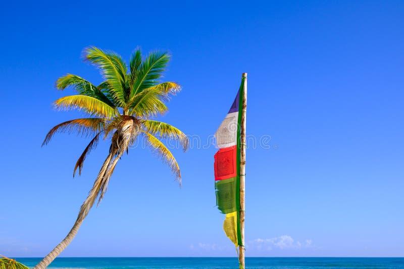 Sommarbilden av palmträdet och buddistbönen sjunker arkivbild