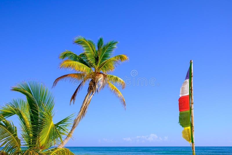 Sommarbilden av palmträdet och buddistbönen sjunker royaltyfria foton