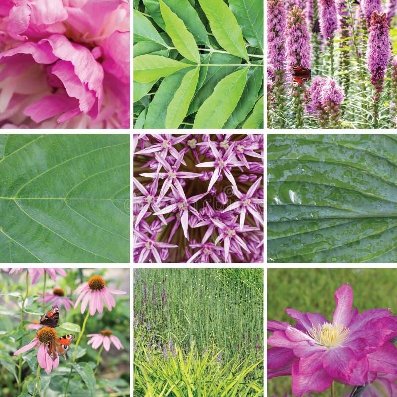 Sommarblommor och växtcollage royaltyfri bild