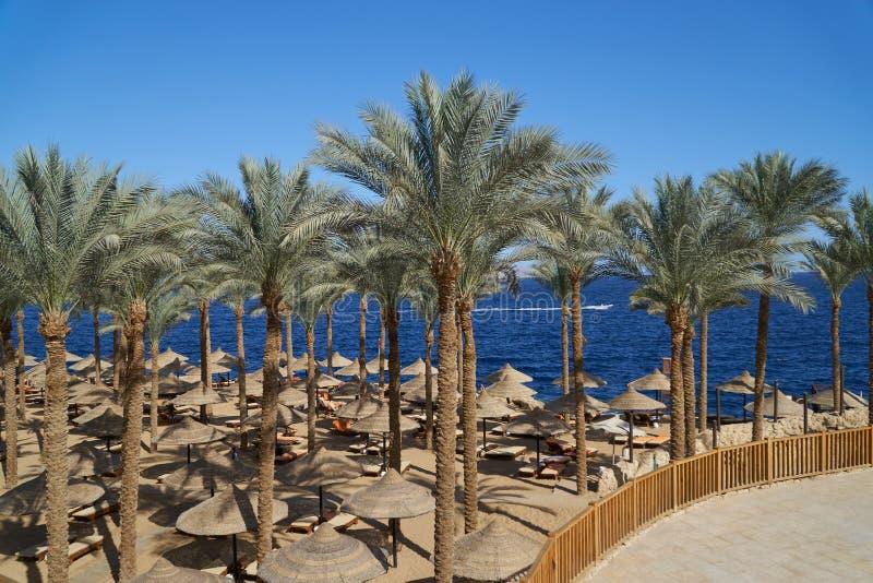Sommarchaisen är slö under ett paraply på den sandiga havsstranden och gömma i handflatan i hotellet Egypten, Sharm el Sheikh, be arkivbilder