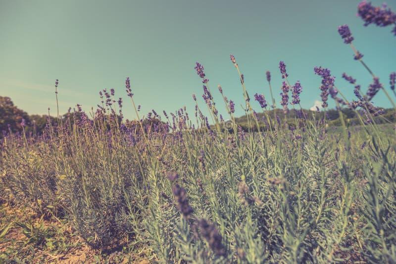 Sommarcloseupblommor och äng ljus liggande Inspirerande naturbanerbakgrund royaltyfri bild