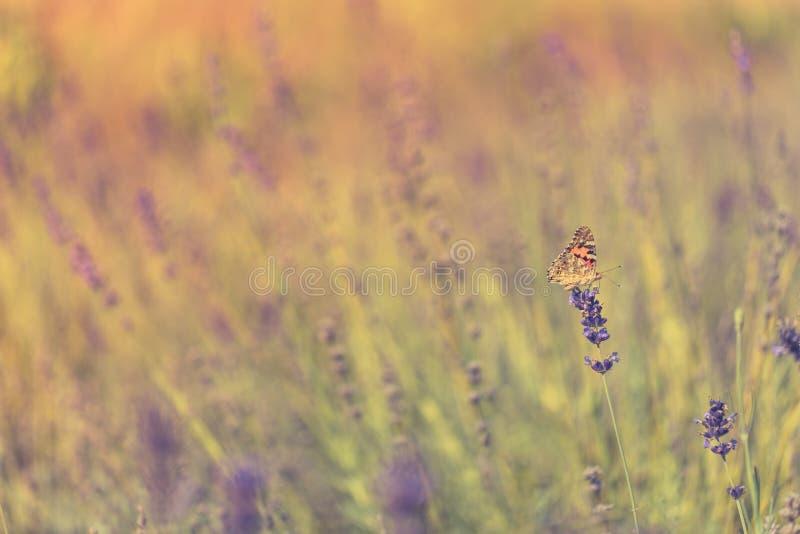 Sommarcloseupblommor och äng ljus liggande Inspirerande naturbanerbakgrund royaltyfri foto